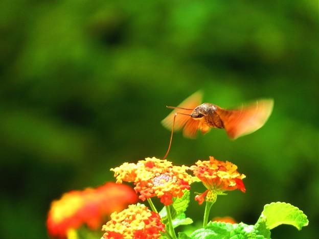 写真: 南海の島の蝶々13