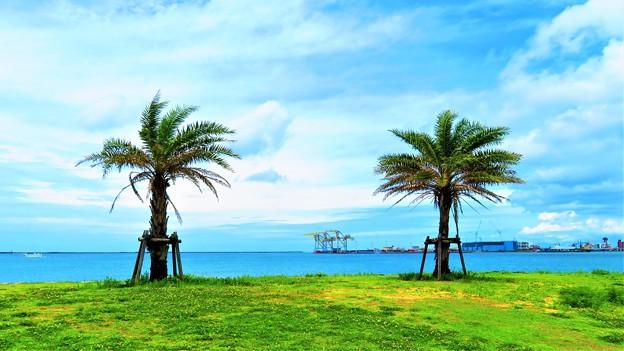 写真: 那覇港3