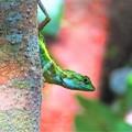 写真: 南海の島の生き物