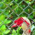 Photos: 今日見た赤い色