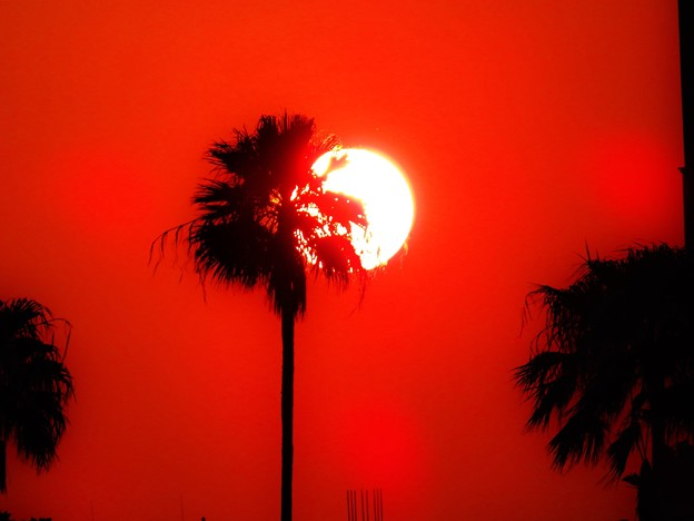 最近見た赤い風景
