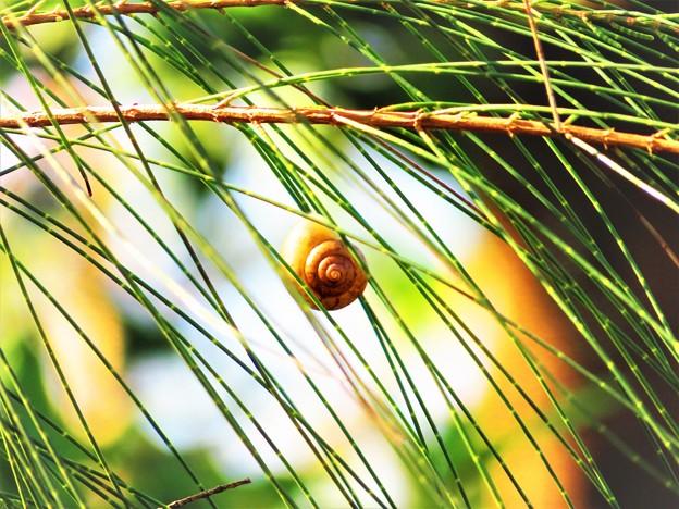沖縄で観た風景 カタツムリ