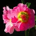 写真: 沖縄で見た花1