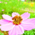 今年出会った蜂