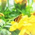 春の色 黄
