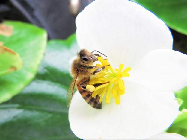 春の色 白