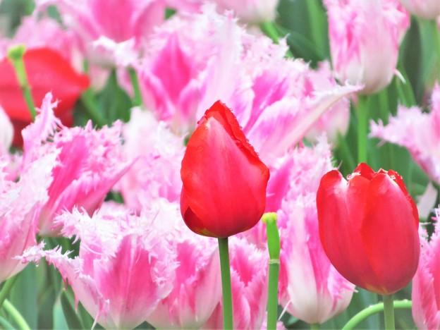 春の色 赤