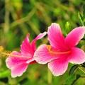 写真: 沖縄の春