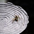 Photos: 蜘蛛