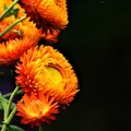 Photos: Greene Orange  Black