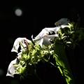 Photos: 影があるから輝く