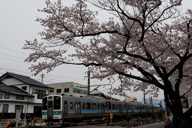 桜並木を駆け抜けて。