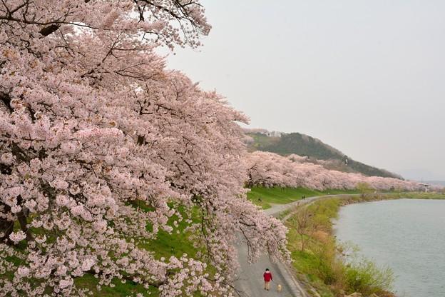 千本桜!!