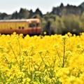 写真: 小湊鉄道の春景色2018c