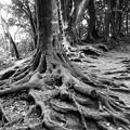 写真: 鎌倉ハイキング