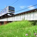 写真: 小糸川橋梁の夏