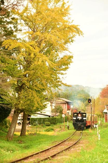 小湊鐵道の秋がまたやってきた