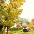 写真: 小湊鐵道の秋がまたやってきた