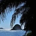 Photos: きらめく海へ