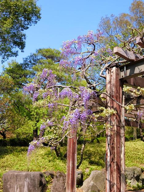 51 日本庭園