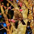 Photos: 花喰う日々
