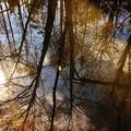 写真: 微かな芽吹き