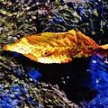 写真: 落葉の気持ち