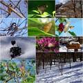 2016-0122 ぐんま昆虫の森