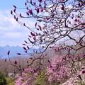 写真: 榛名山を望む