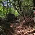 写真: 山路を歩く