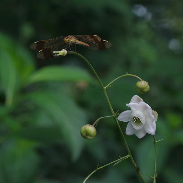 写真: 優しく咲いて♪