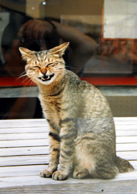 写真: 笑うネコ