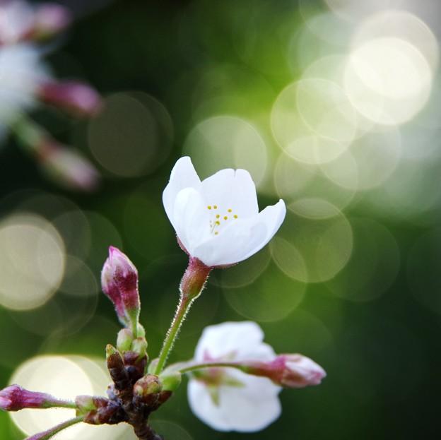 写真: 春の陽気