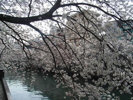 2008-03-29_040
