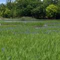 小堤西池 (2)