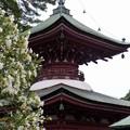 写真: 稲沢あじさいまつり (5)