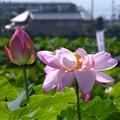 森川花はす田 (4)
