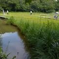 吉賀池湿地風景 (1)