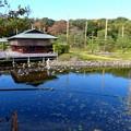 白鳥庭園 (1)