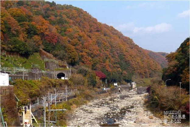 愛岐トンネル群 (81)