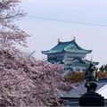 名古屋城界隈 (1)