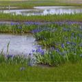 小堤西池 (4)