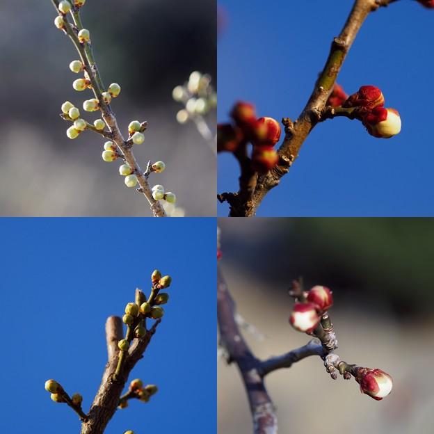 Photos: 連綿