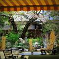 写真: カフェからの眺め