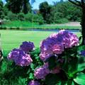 写真: 木陰に咲く