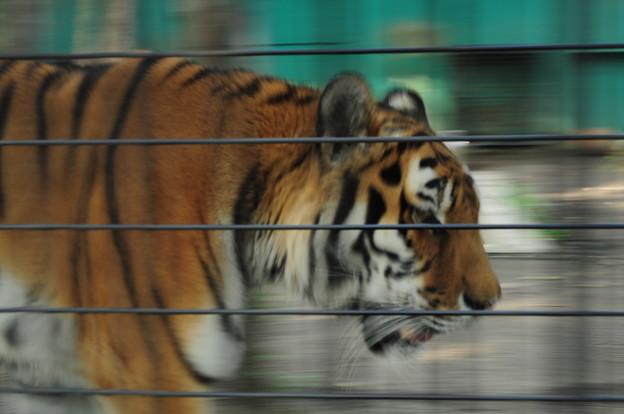 帯広動物園8