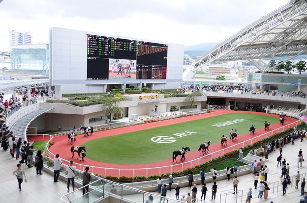 阪神競馬場15