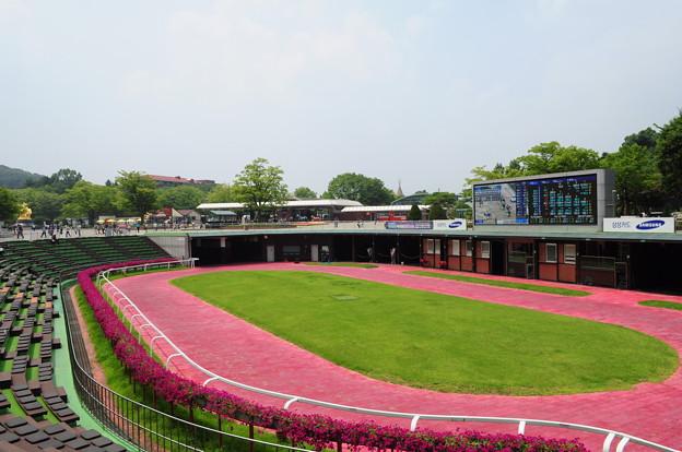 韓国競馬公園 Lets Run Park 5