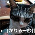 Photos: 2018/12/05 猫スズ(すず)写真 KIMG0240