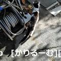 Photos: 2018/12/09 猫ハナ(はな)写真 KIMG0251